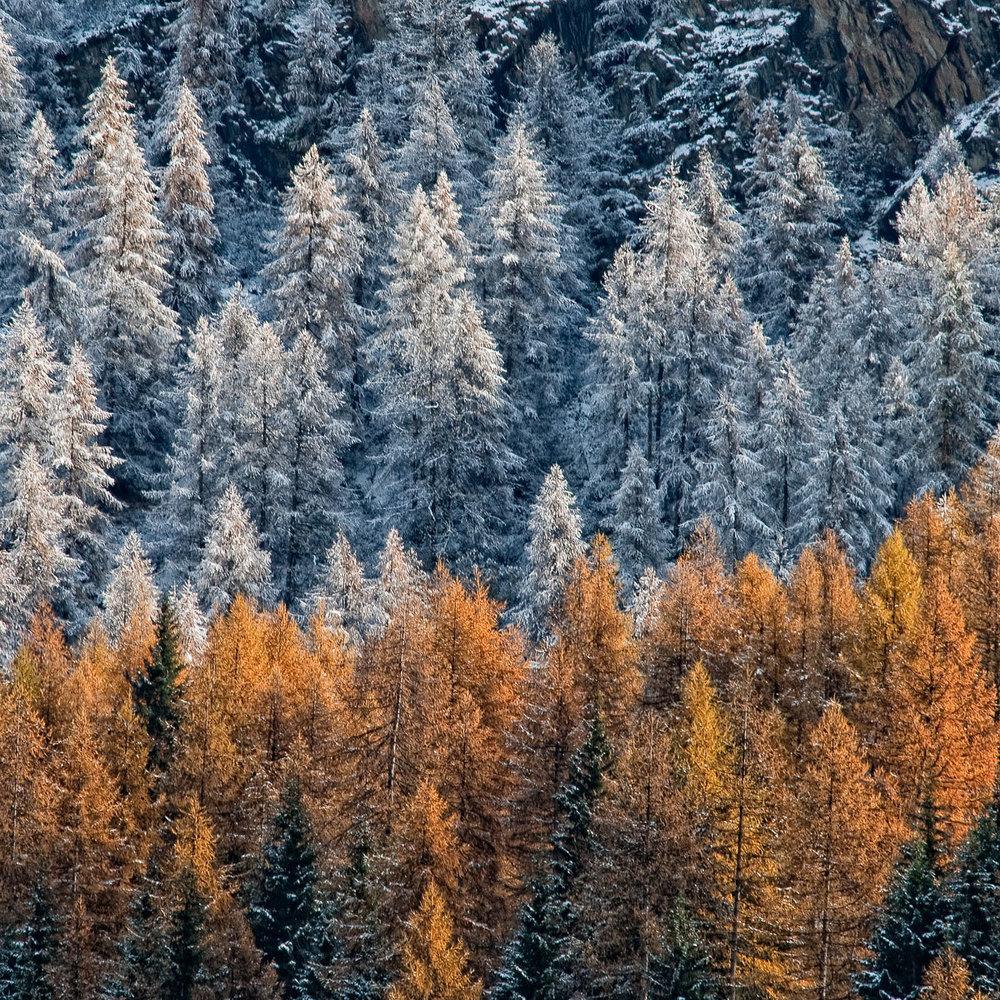 Autunno Neve