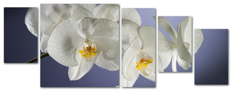 orchidea multiformato 5pezzi / 203x76 cm codice 023