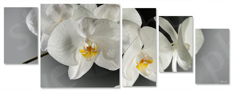 orchidea multiformato 5pezzi / 203x76 cm codice 024