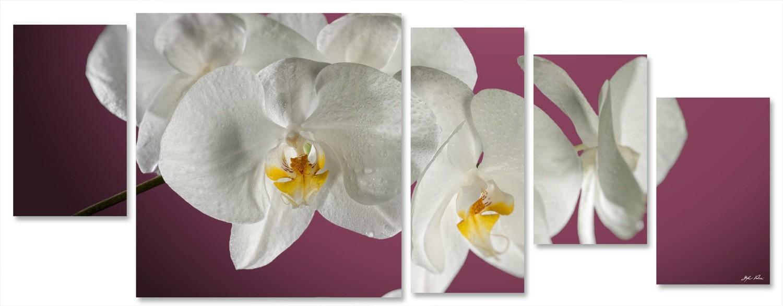 orchidea multiformato 5pezzi / 203x76 cm codice 028