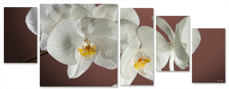 orchidea multiformato 5pezzi / 203x76 cm codice 029