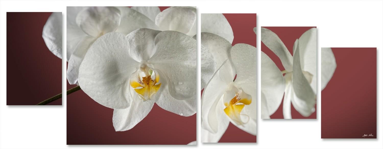 orchidea multiformato 5pezzi / 203x76 cm codice 027