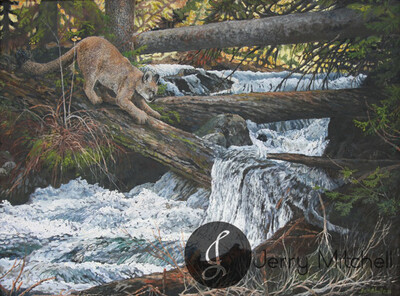 Granite Creek Puma