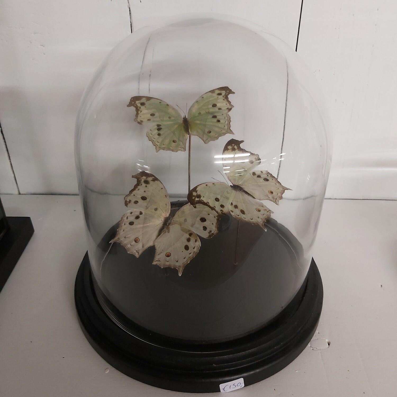 Bolstolp witte vlinders ( 3 stuks)