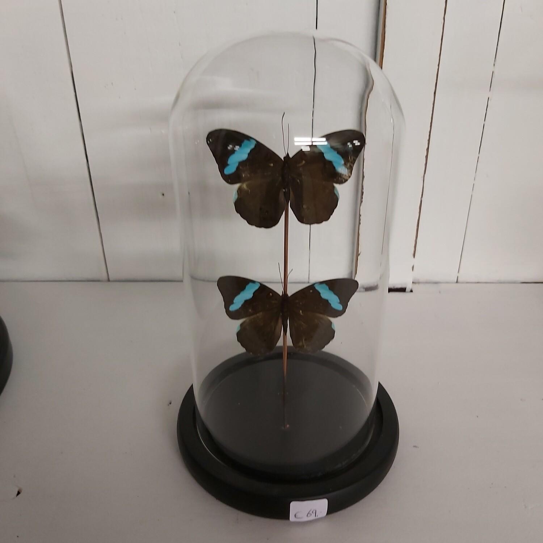 Stolp small 20 cm vlinder Black & Blue