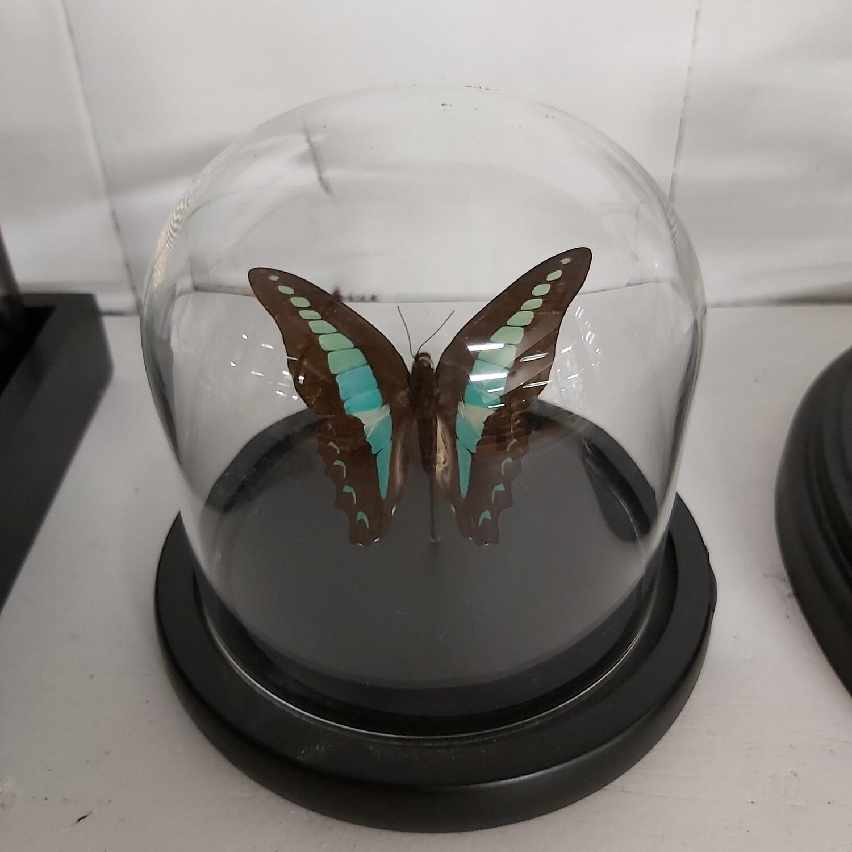 Mini stolp vlinder blauw