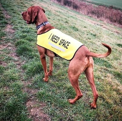 I NEED SPACE™ Dog Vest