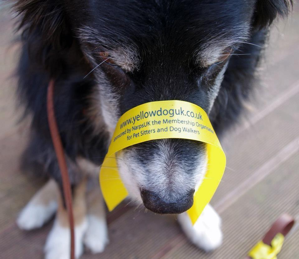 Yellow Dog UK Ribbons and Bundles