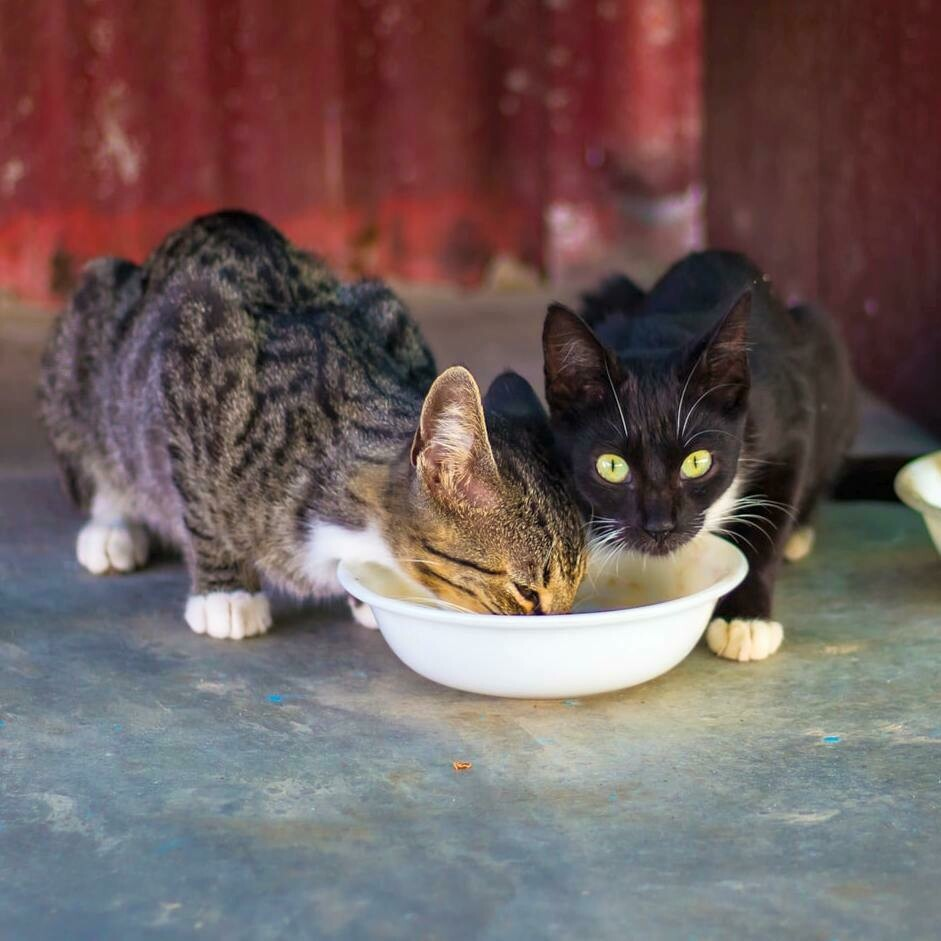 Buy a week's food and litter for a cat in care