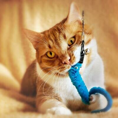 Treat a foster cat to toys and a blanket
