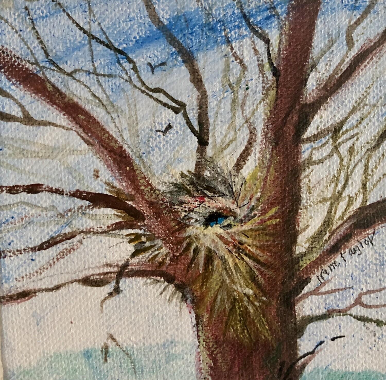 Tree Nest 3