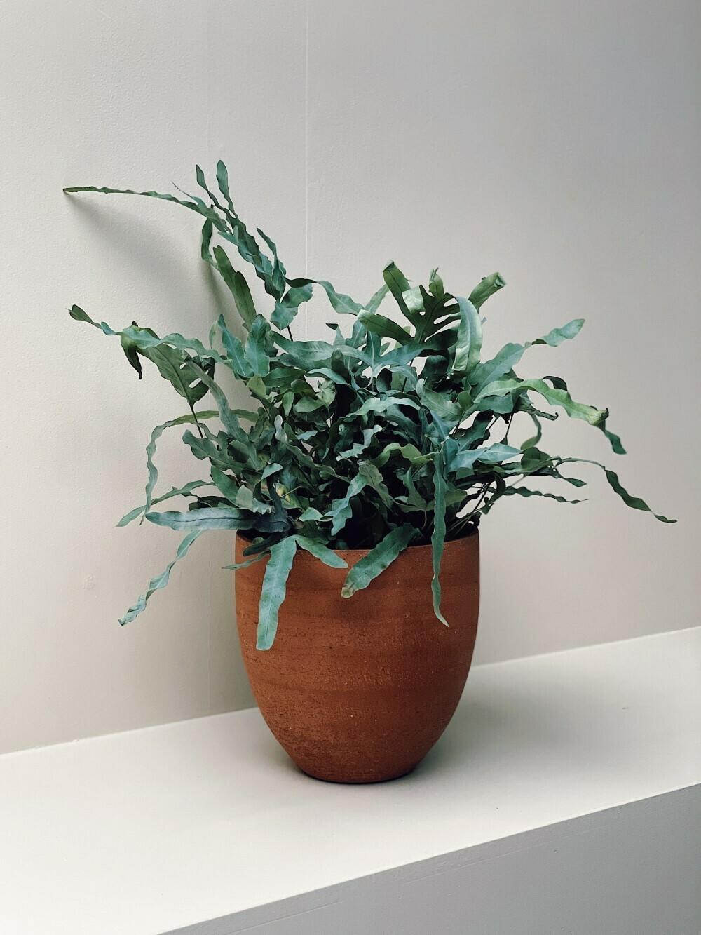 Charlotte - Brushed Terracotta