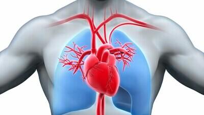 Comprehensive Cardiovascular Health Panel