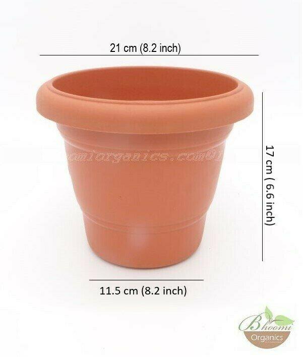 Regular terracotta  pot (8 inch)