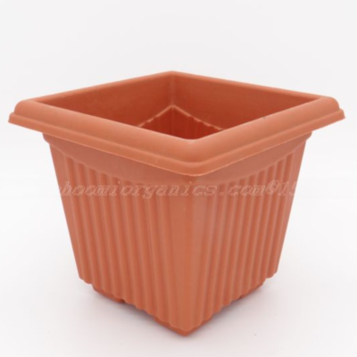 Square Terracotta plastic pot ( 10 inch )