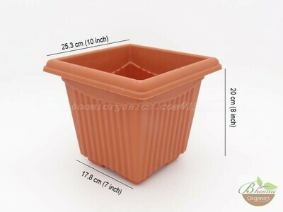 Square Terracotta plastic pot ( 10 inch )