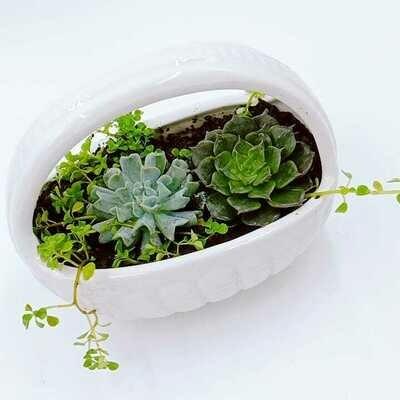 Crassulaceae in ceramic basket