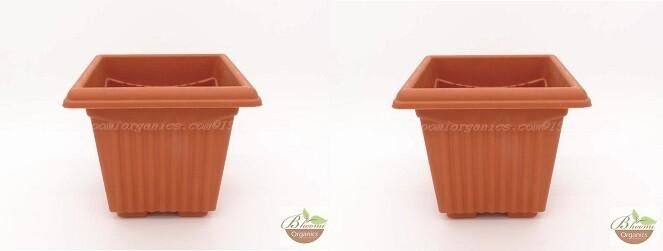 Square Terracotta plastic pot  (10inch)