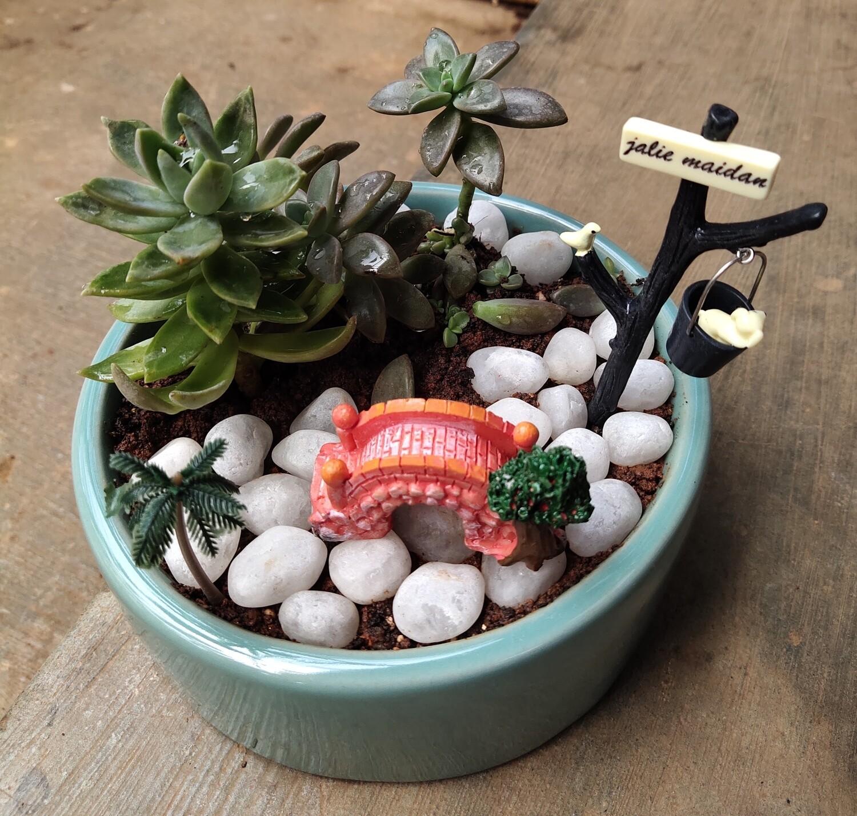 Bowl of joy ( succulent )