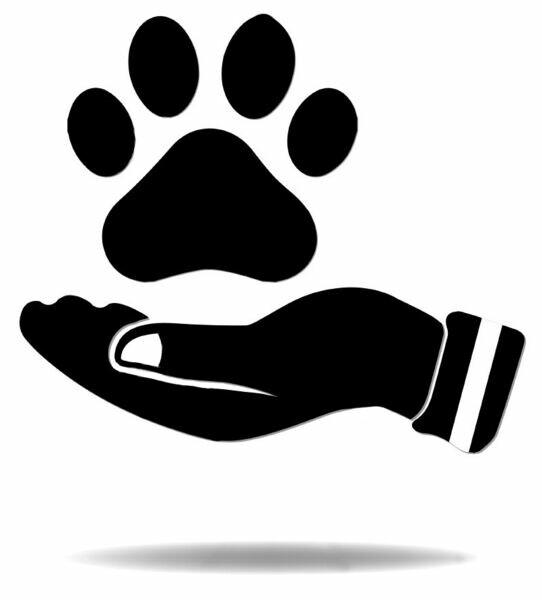 Innishfree Handpicked-Puppies