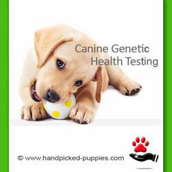 Health Testing Guarantee or Genetic Fraud?
