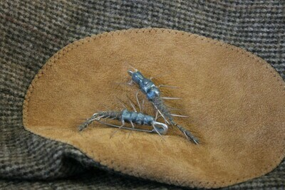 Articulated Hellgrammite Pin