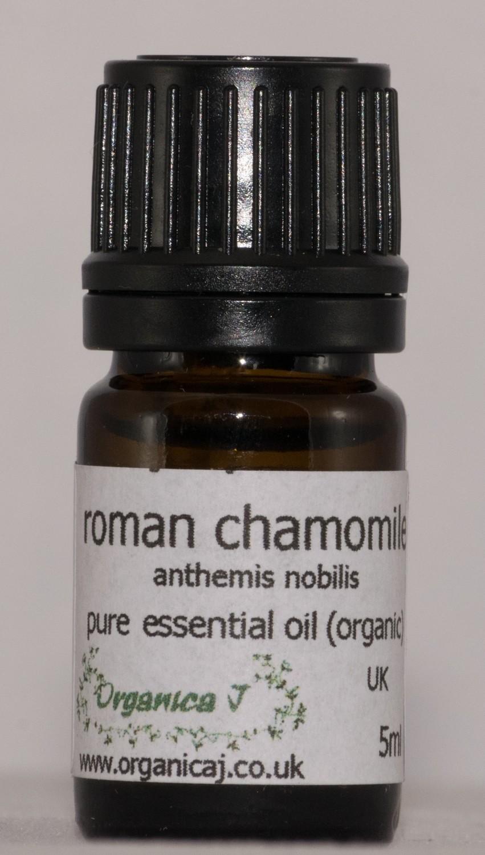 Chamomile, Roman (anthemis nobilis)