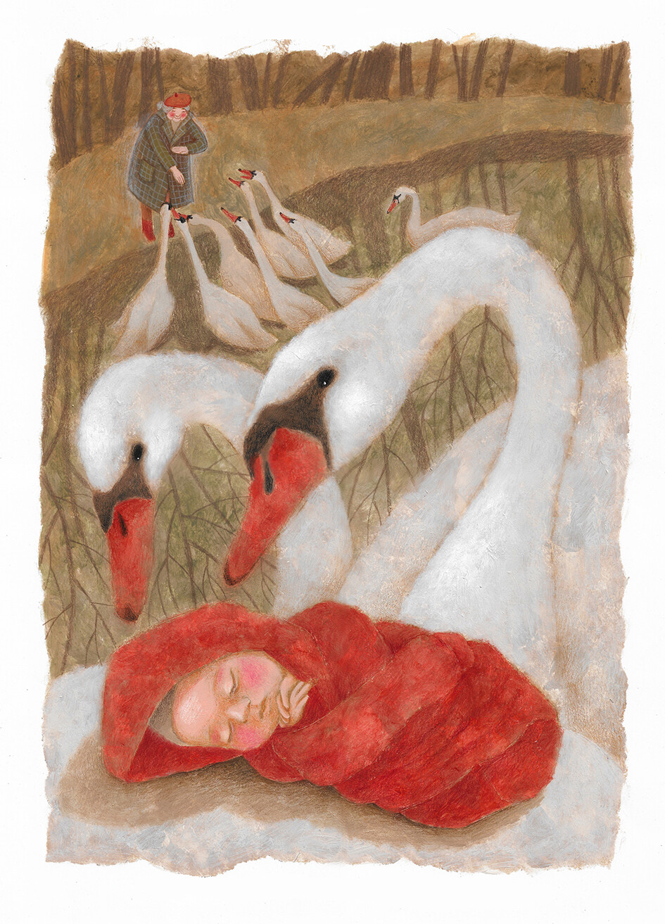 Swans and Baby