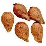 Coconut Kalash 5 pcs (Pack) (Approx 1600 g - 2000 g)
