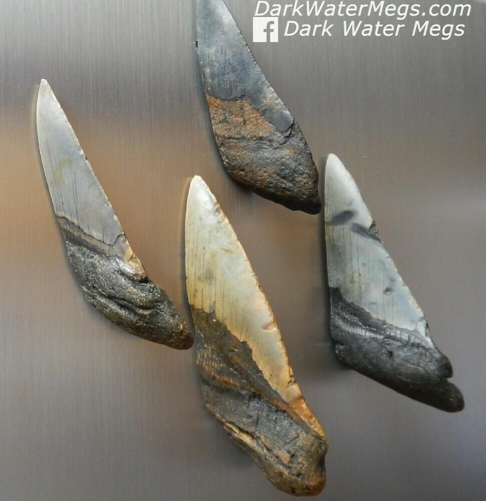 Megalodon Magnets - Refrigerator Etc