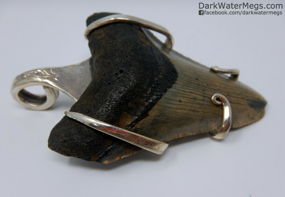 """2.72"""" Fork Wrapped Megalodon Necklace"""