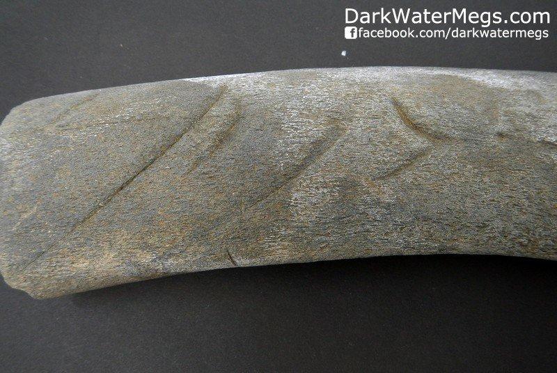 "9.73"" Whale Rib Bone With Predation (Bite Marks)"