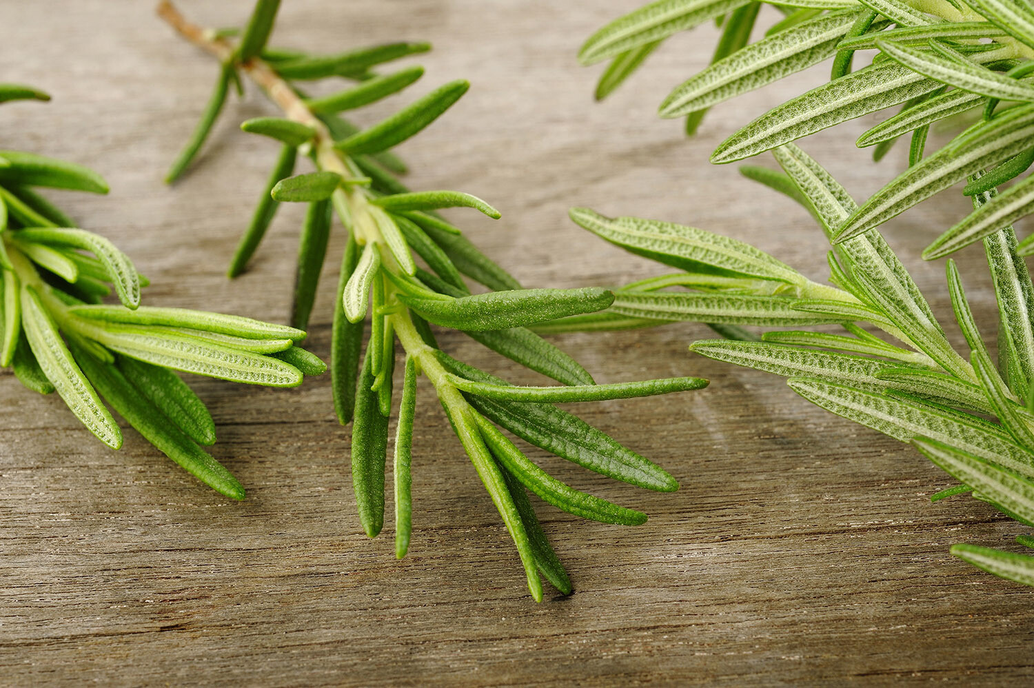ESSENTIAL OIL OF ROSEMARY - 28ml