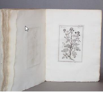 COLONNA, Fabio.- Seconde et dernière édition du Phytobasanos sive plantarum aliquot historia, 1744.