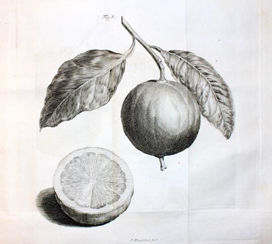 LA COURT.- Les Agrémens de la Campagne, 1750. Première traduction française.