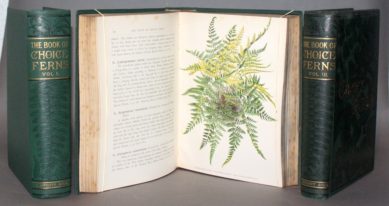 SCHNEIDER, George.- The Book of choice Ferns for the Garden, Conservatory and Stove, 1892-1894.