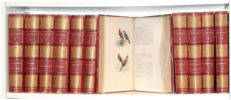 BUFFON.- Œuvres complètes..., 1853. 164 gravures hors texte représentant 800 sujets finement coloriés d'après les dessins de Traviès.