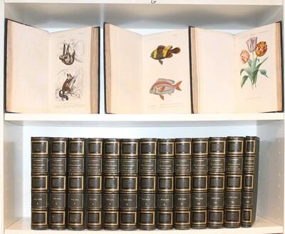 ORBIGNY, Charles d'.- Dictionnaire universel d'histoire naturelle, 1849. 16 volumes, plus de 250 planches coloriées.