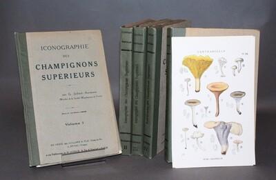 JUILLARD-HARTMANN.- Iconographie des champignons supérieurs, 1919. Édition originale ornée de 250 planches en couleurs.