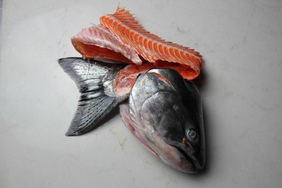 Chinook Salmon Frame
