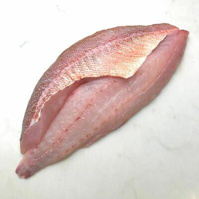 Chilipepper Rockfish - F/V Mr. Morgan (1.0 lb)