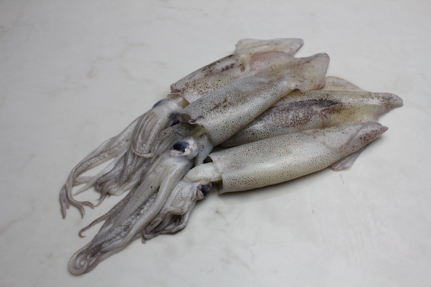 FROZEN & VAC SEALED Whole Market Squid (2.0 lbs)