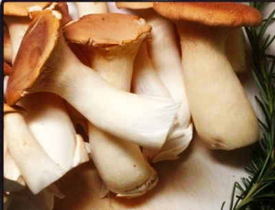 King Trumpet Mushrooms - Far West Fungi (1.0 lb)