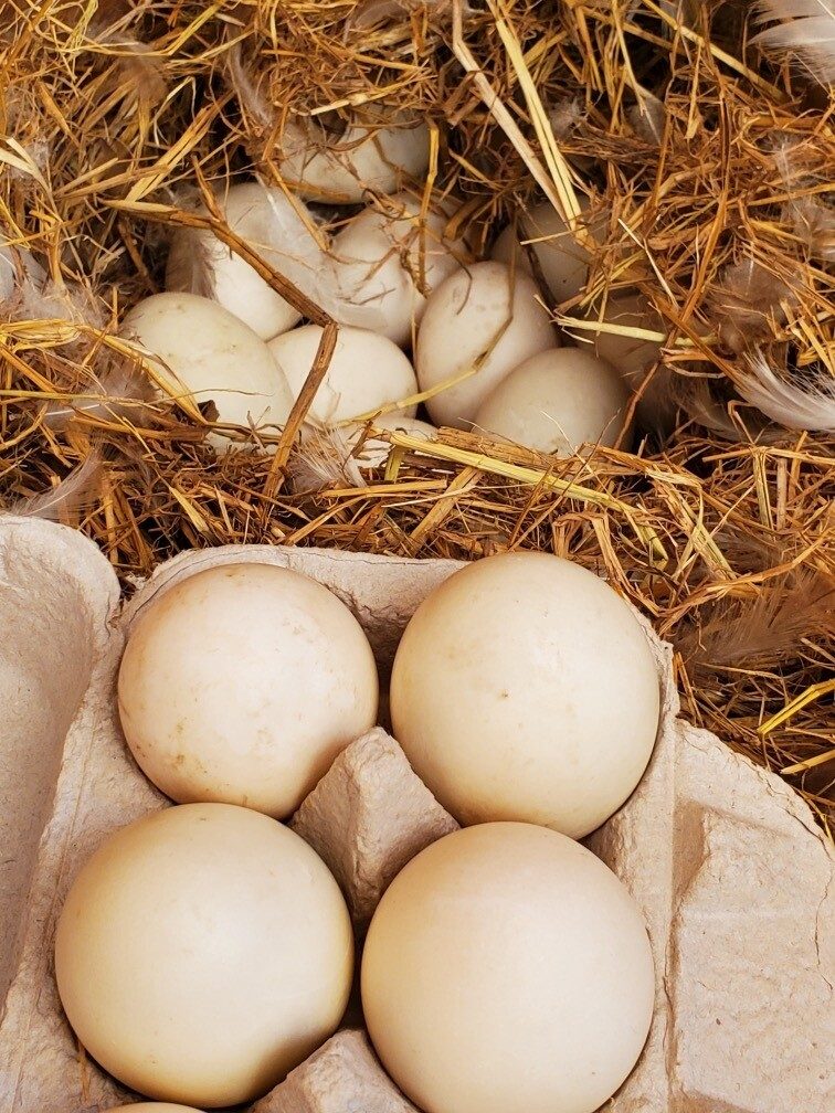 1/2 Dozen Duck Eggs - Corvus Farm