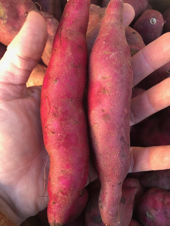 Mix Sweet Potato Creamers - Sea to Sky  (2 lb)