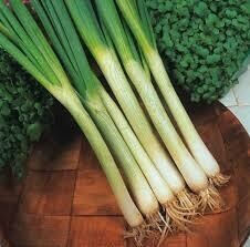 White Spring Onion - Groundswell Earth  (1 bunch)