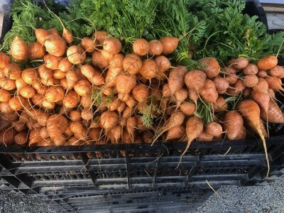 Baby Parisian Carrots - Mariquita Farm (1 bunch)