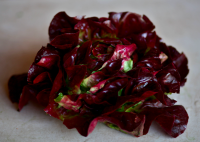 Red Butter Lettuce - Groundswell Farm  (1 head)