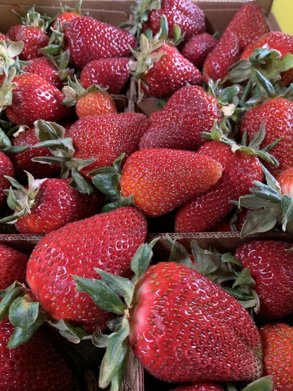 Strawberries (1 pint) - Live Earth Farm