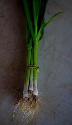 Green Garlic - Live Earth Farm